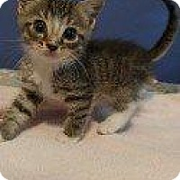 Adopt A Pet :: BRANDON (BETTE BABY(BABBER)) - Hampton, VA