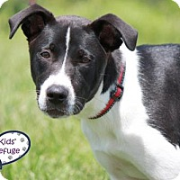 Adopt A Pet :: Sarah Lee - Lee's Summit, MO