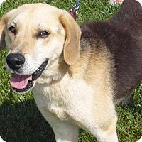 Adopt A Pet :: Benjamin - Mineral, VA