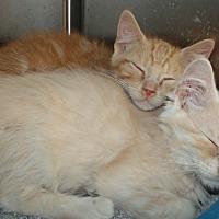 Adopt A Pet :: Ben & Jerry - Somerset, KY