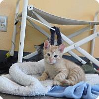 Adopt A Pet :: KITTENS - Ridgway, CO