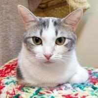 Adopt A Pet :: Sphynx - Erin, ON