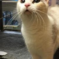 Adopt A Pet :: Juno (Cher) - McDonough, GA