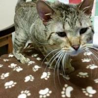 Adopt A Pet :: Kyle - Waupun, WI
