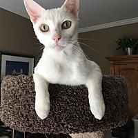 Adopt A Pet :: Mr Biggs - Smyrna, GA