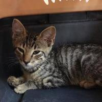 Adopt A Pet :: 36333600 - West Monroe, LA