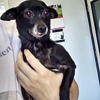 Adopt A Pet :: Skeeter - Savannah, GA