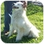 Photo 4 - Great Pyrenees Mix Dog for adoption in Lexington, Missouri - Mindy