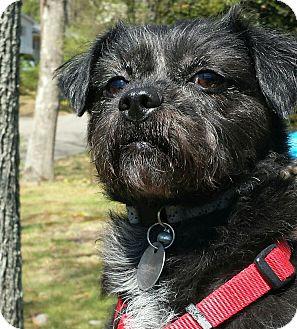 Cairn Terrier Mix Dog for adoption in Brattleboro, Vermont - Wendy