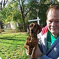 Adopt A Pet :: Slick - West Bloomfield, MI