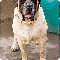 Adopt A Pet :: Keizer - Portland, OR