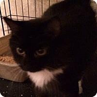 Adopt A Pet :: Layla - Wenatchee, WA