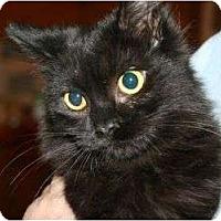 Adopt A Pet :: Becall - Canoga Park, CA