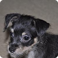 Adopt A Pet :: Zach - Tumwater, WA