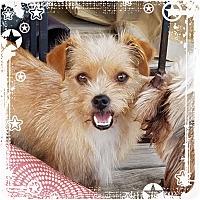 Adopt A Pet :: Katie - San Antonio, TX