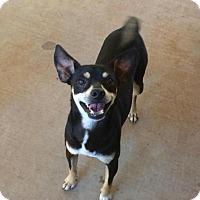 Adopt A Pet :: George - Post, TX