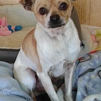 Adopt A Pet :: Ruben - Encino, CA
