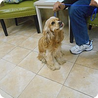 Adopt A Pet :: Molly -Adopted! - Kannapolis, NC