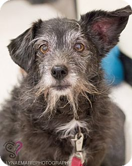 Terrier (Unknown Type, Small) Mix Dog for adoption in Grand Rapids, Michigan - Cookie