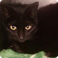 Adopt A Pet :: Baby Face - Cambridge, MD