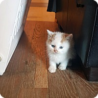 Adopt A Pet :: Agos - Mississauga, Ontario, ON