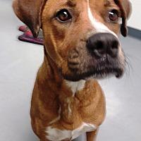 Adopt A Pet :: Ruby - Casa Grande, AZ