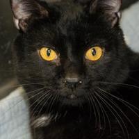 Adopt A Pet :: Eclipse - Pendleton, OR