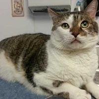 Adopt A Pet :: Baby - Margate, FL