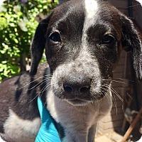 Adopt A Pet :: Delilah - Santa Ana, CA