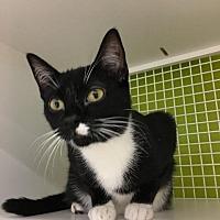 Adopt A Pet :: MooMoo AKA Miller 2 - Spring, TX