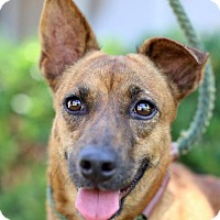 Adopt A Pet :: Savannah - San Diego, CA