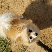 Adopt A Pet :: T-Bo - Scottsboro, AL