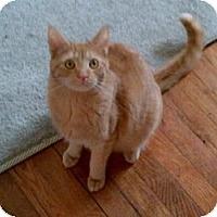 Adopt A Pet :: Orville - Kensington, MD