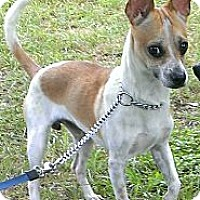 Adopt A Pet :: Jerry Garcia - Spring Branch, TX