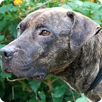 Adopt A Pet :: Possum - Gainesville, FL