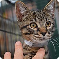 Adopt A Pet :: Indigo - Brooklyn, NY
