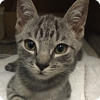 Adopt A Pet :: Parker - New York, NY