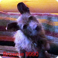 Adopt A Pet :: Brownie - Greencastle, NC