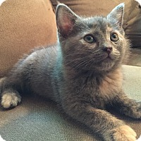 Adopt A Pet :: Brooke - Richmond, VA