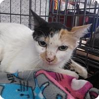 Adopt A Pet :: Willow - Alamo, CA