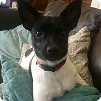 Adopt A Pet :: Aaron in CT - East Hartford, CT