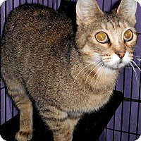 Adopt A Pet :: Isabell - Chattanooga, TN