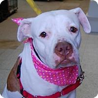 Adopt A Pet :: Summer - Brooklyn, NY