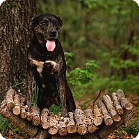 Adopt A Pet :: Candy - Ellaville, GA