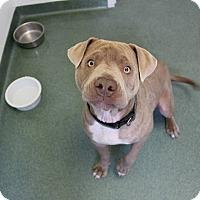 Adopt A Pet :: Bubba - East Randolph, VT