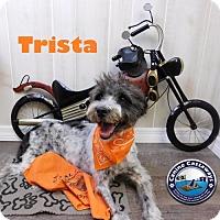 Adopt A Pet :: Trista - Arcadia, FL
