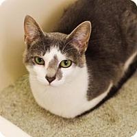Adopt A Pet :: Purple - Boise, ID