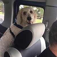 Adopt A Pet :: Daisy - Libertyville, IL
