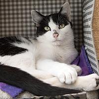 Adopt A Pet :: Jacqueline - Wilmington, DE