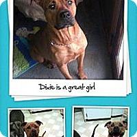 Adopt A Pet :: Dixie - maryville, TN